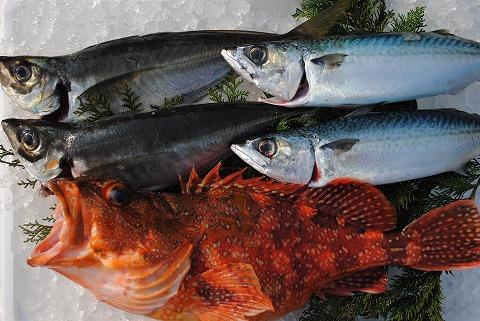 対馬で穫れる魚
