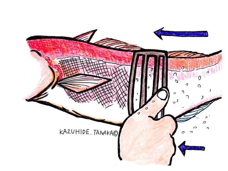 1.ウロコ引き(あれば)を尾から頭へと動かしウロコをかきとる。