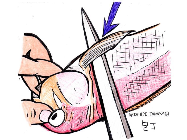 中骨まで斜めに切り(裏側も)、頭を落とす。