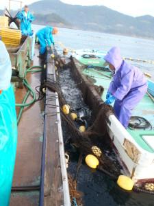 行き場を失いつつある魚は抵抗して暴れ周り、水飛沫が物凄い。そのため、船員たちはレインギアーを着用。