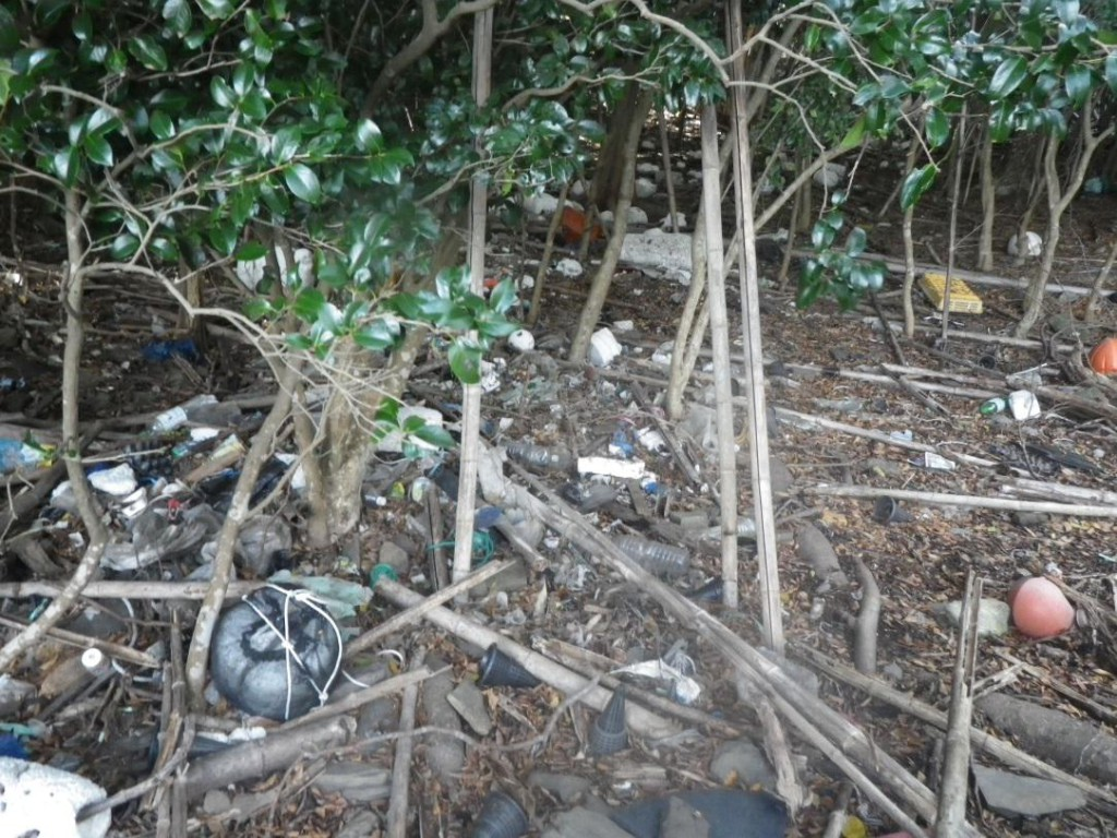 写真-2 浅茅湾の島に打ち上げられた漂着ゴミ