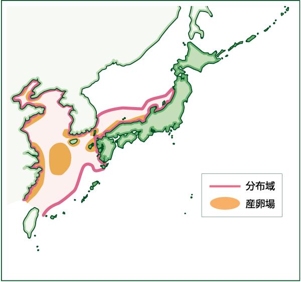 タチウオの分布図